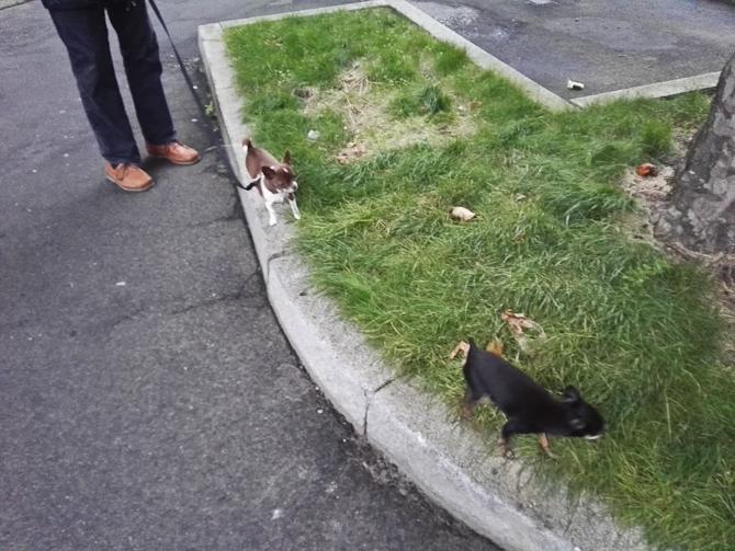 To små på græs
