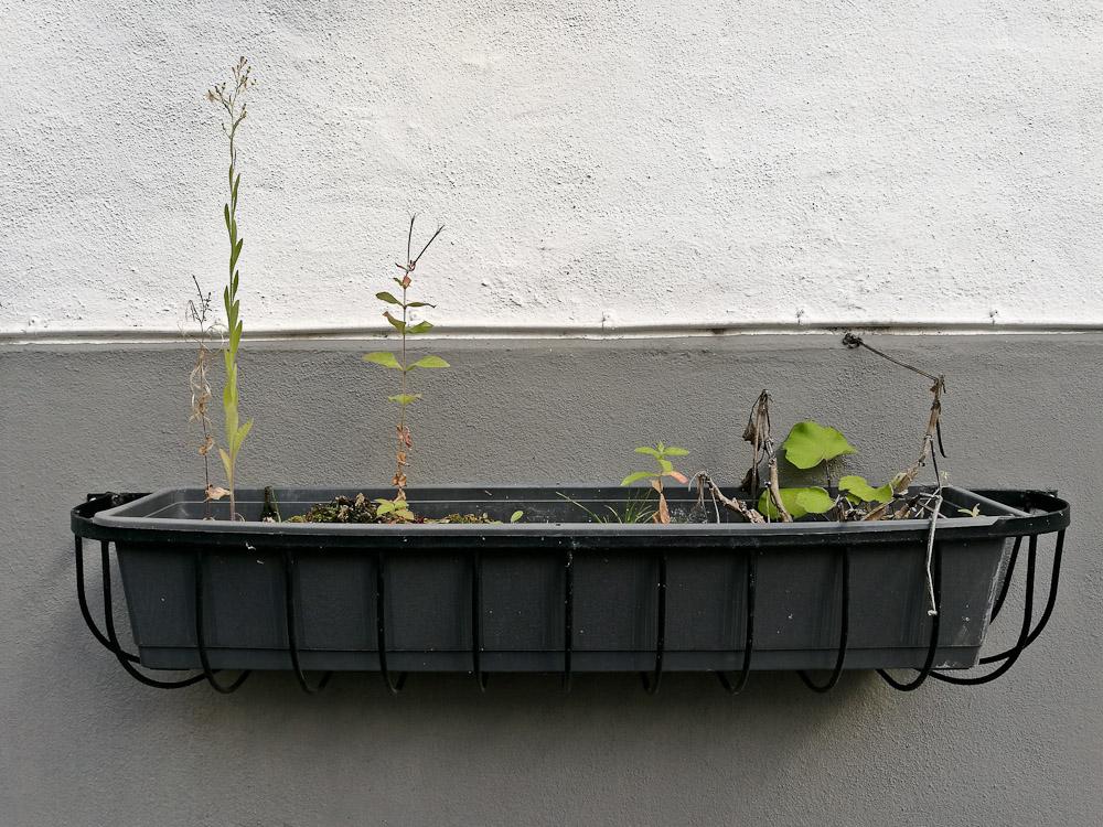 Plantekassen er blevet lidt vissen