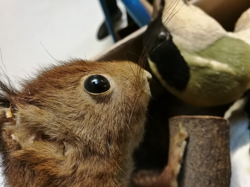 Egern close-up