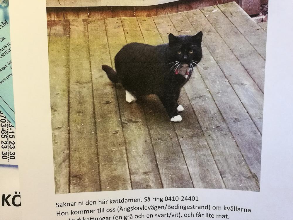 Miauv?