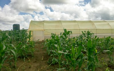 The NABIO NYELA greenhouse