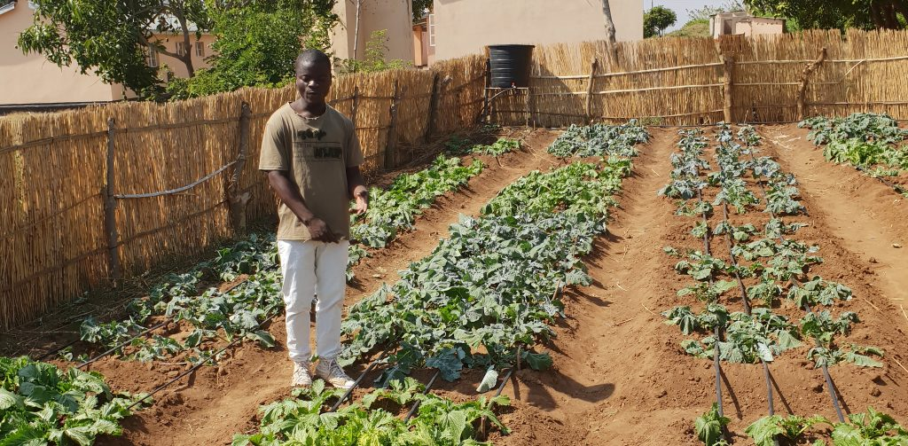 A man stand in his vegetable field.