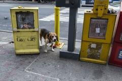 kl_newyork_402