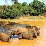 Linn og Ole på Safari i Yala nasjonalpark