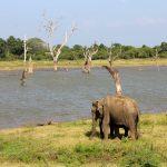 Elefant safari Sri Lanka