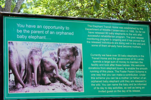 Elefant Udawalawe Transit Home Sri Lanka