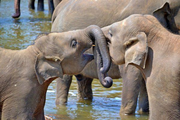 Reise til Sri Lanka med barn