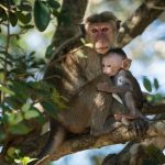 Yala Safari Monkeys
