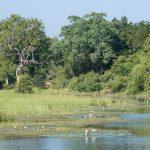 Yala nasjonalpark