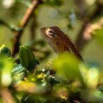 regnskogen Sinharaja tropiske dyr og planter