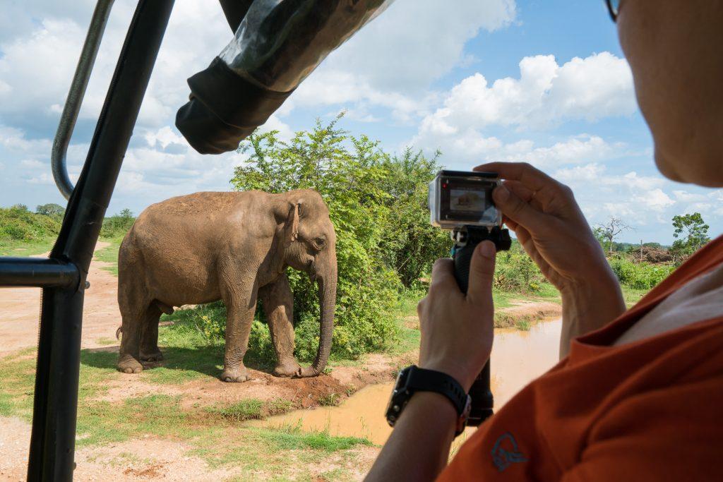 Udawalawe Elefant