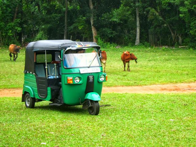 Hvordan kjøre tuktuk på Sri Lanka