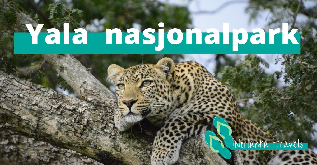 safari i Yala nasjonalpark