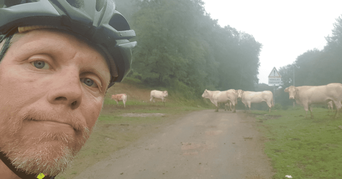 cows-on-the-road-NVC-trip