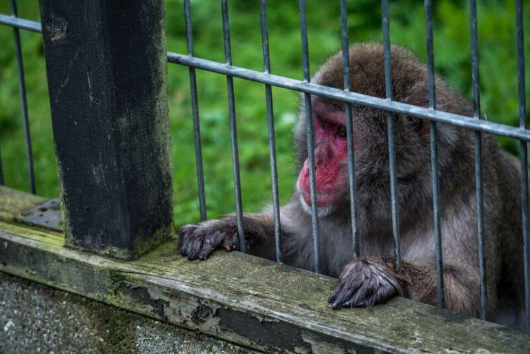 Blavand-Zoo-Denmark-2016-©-J-McArthur-BFF-28_preview-768x513