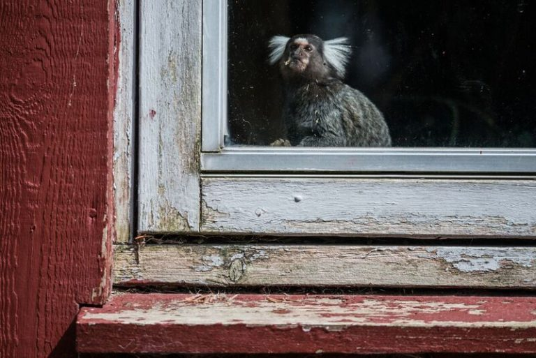 Blavand-Zoo-Denmark-2016-©-J-McArthur-BFF-9_preview-768x513