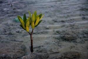 Robusthed handler om god ledelse