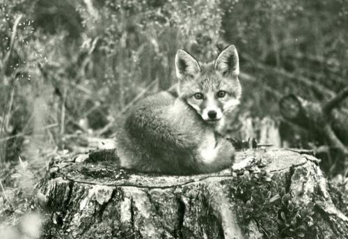 Vilda djur (4)
