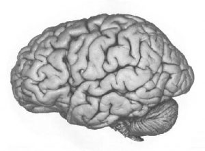 picture of the left hemisphere