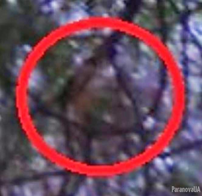 Ansikte i trädet.