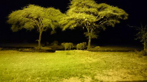 Elefanten Senyati bei Nacht