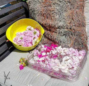 toerrede rosenblade
