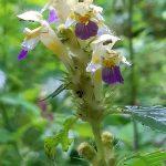 vild blomst hos Garden of York