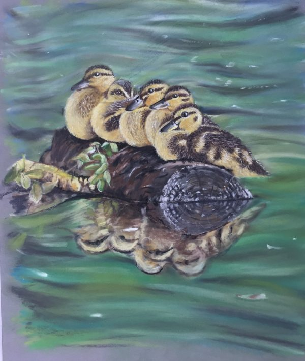 Ducks, ducklings