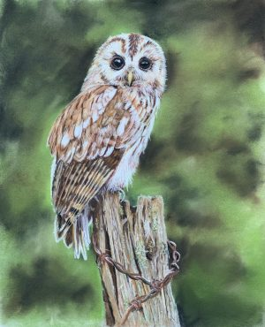 Nature Art, Wildlife Art, Bird Art, Pastel Pencils
