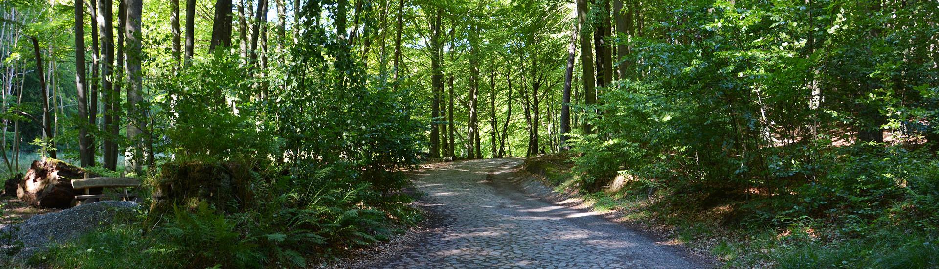 Slider_1920x550_Buchenwald Sassnitz_01