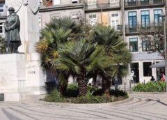 O Porto aqui tão perto: Praça Carlos Alberto