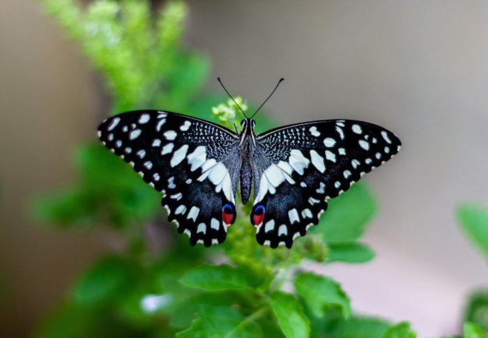 Spread your wings my little butterfly