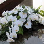 Rouwstuk-Nr13-witte-phalaenopsis1