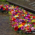 traan_gemengde_bloemen