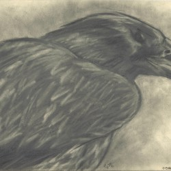 103: Birds 07