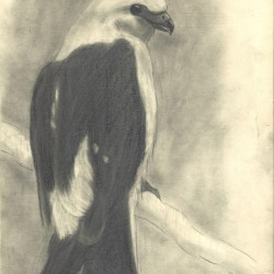 106: Birds 10