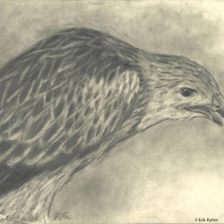107: Birds 11
