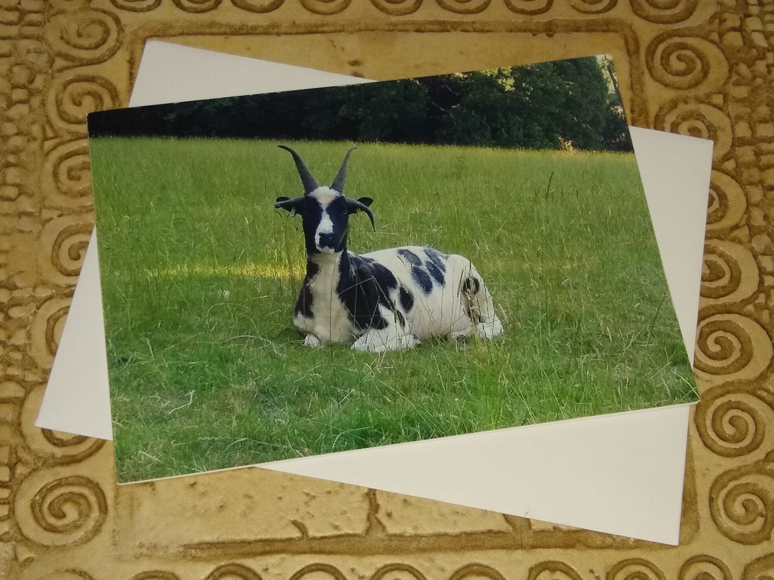 Jacob Ewe Card