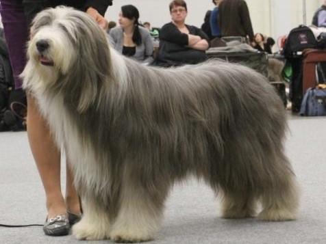 hairdogs 1