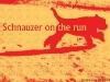1269437534_schnauzer-on-the-run-1