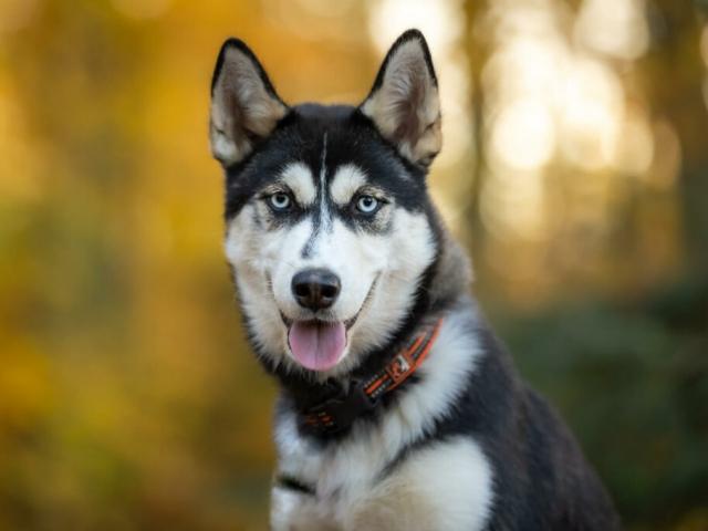 Hunde fotografering