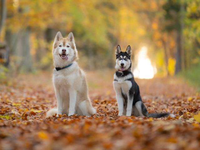 Hundefotografering bildsø