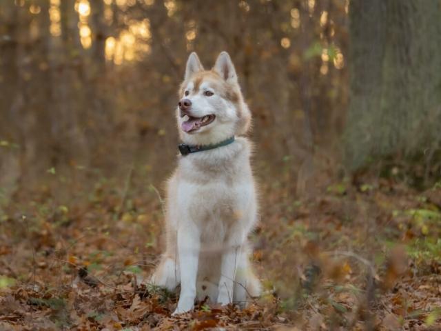 Efterårsfotografering af hund