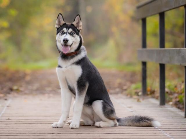 Kæledyrs fotografering i bildsø