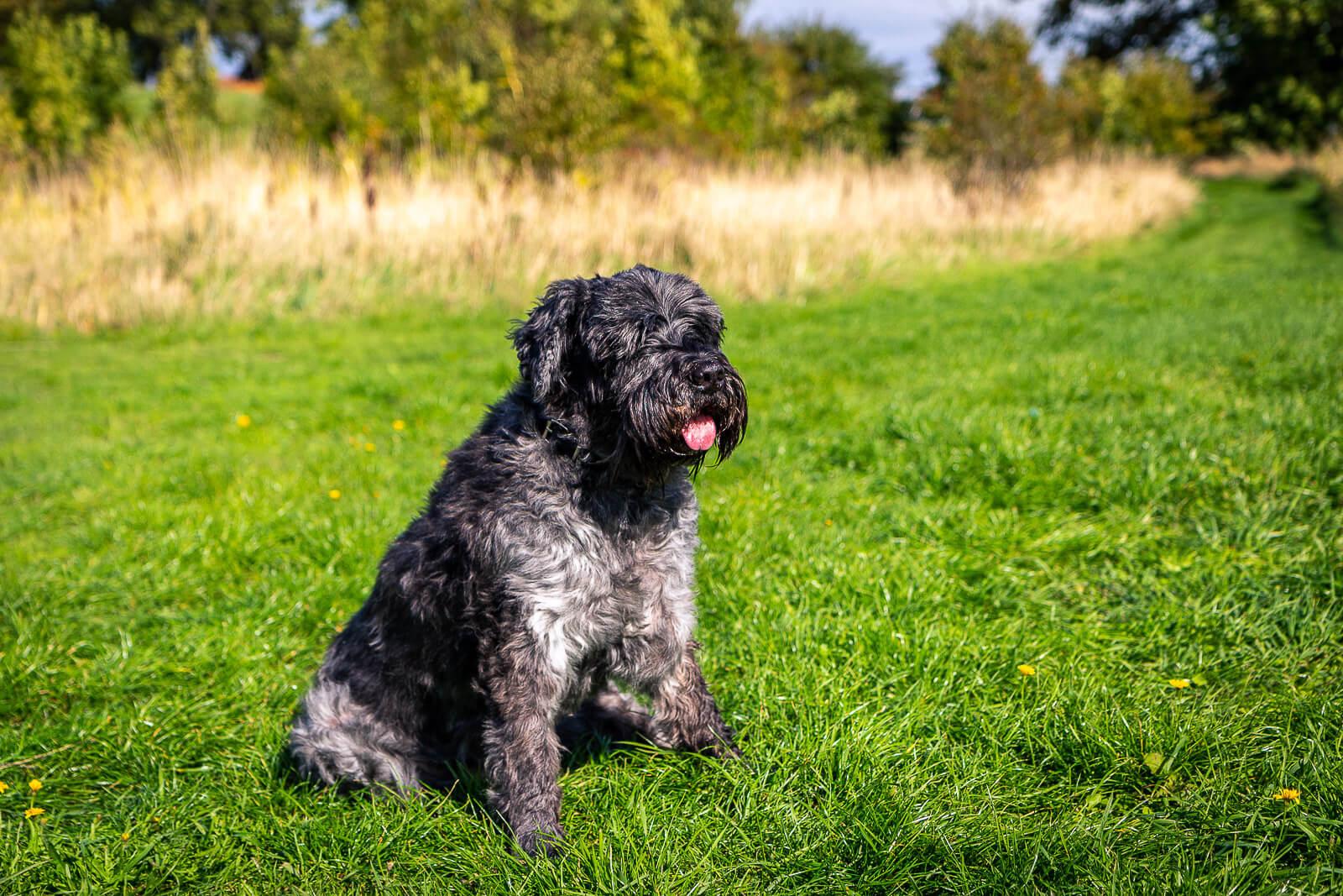 Hunde fotograf i Korsør