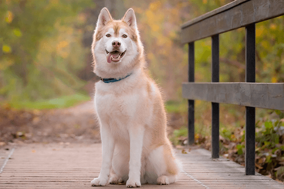 Kæledyrsfotografering