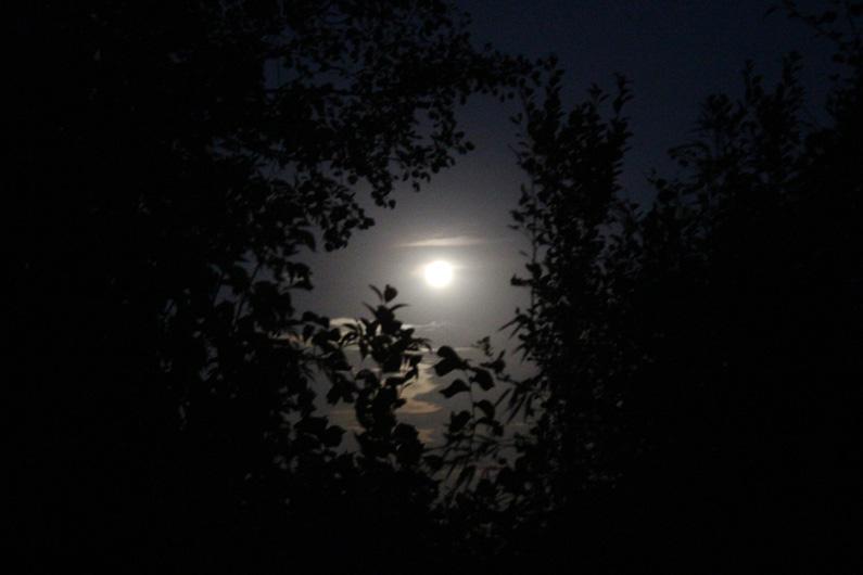 Fuldmåne
