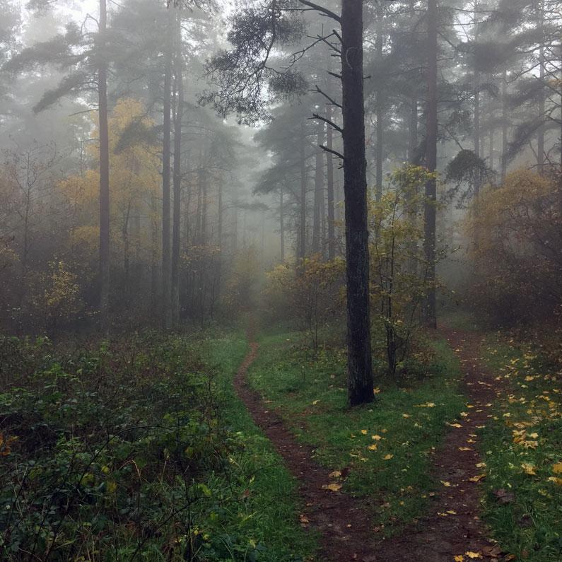 Mols Bjerge, Tinghulen - magisk skov