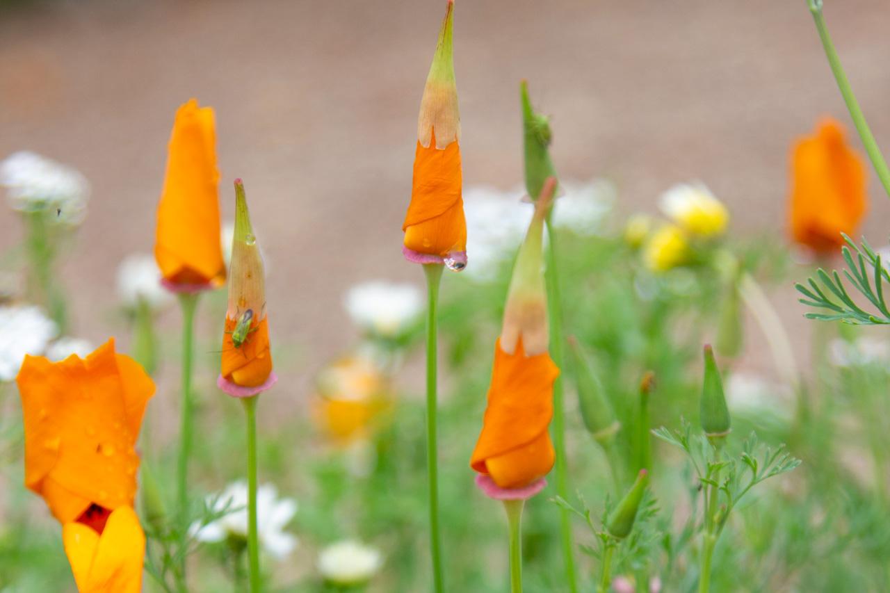 Hverdagsmagi blomster