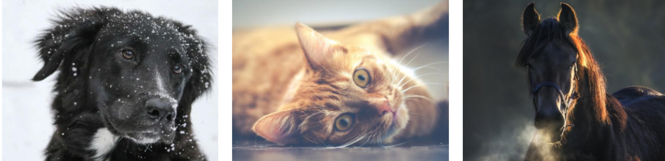 Wertvolle Ratgeber und Seminare rund um Hund – Katze – Pferd